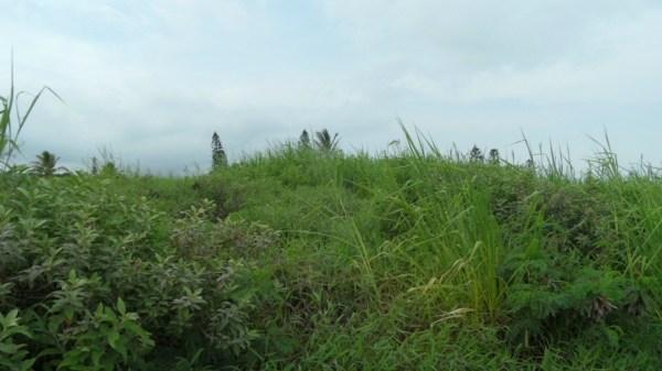 Awa Pae Loop # : 458, Naalehu, HI 96772
