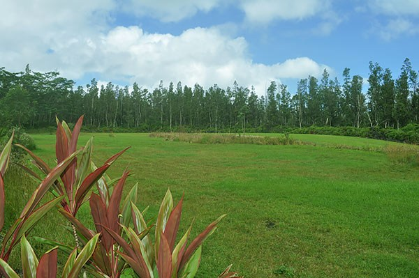 Real Estate for Sale, ListingId: 30380838, Pahoa, HI  96778