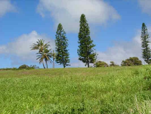 Awa Pae Pl # : 443, Naalehu, HI 96772