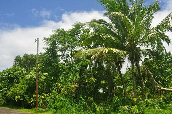 Real Estate for Sale, ListingId: 33832989, Pahoa,HI96778