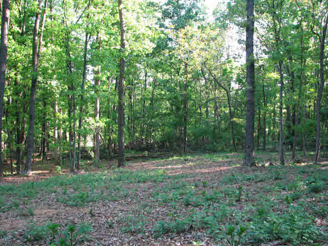 Image of Acreage for Sale near Mount Solon, Virginia, in Augusta county: 11.00 acres