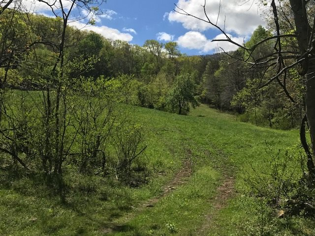 Image of  for Sale near Stanley, Virginia, in Page County: 145 acres