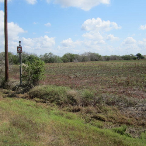 21.57 acres Kingsville, TX