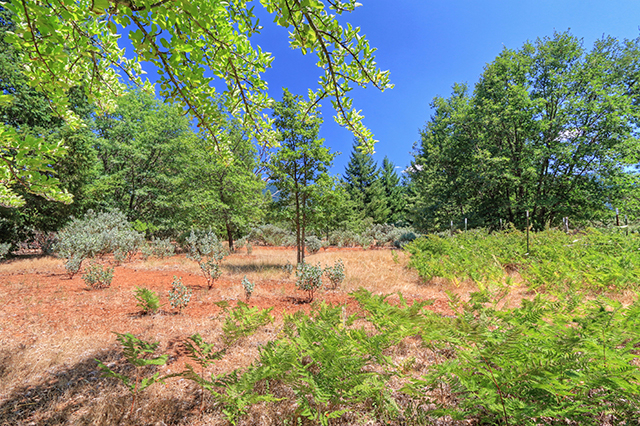 Photo of 494 Old Onion Mountain Rd  Wilderville  OR