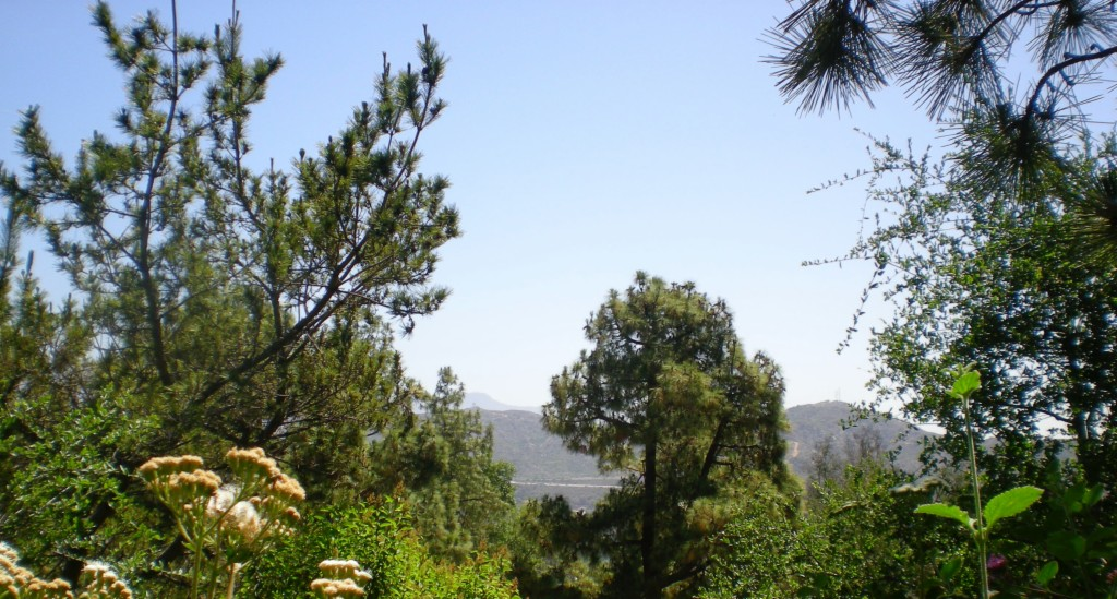Photo of 1100 San Luis Rey  Glendale  CA