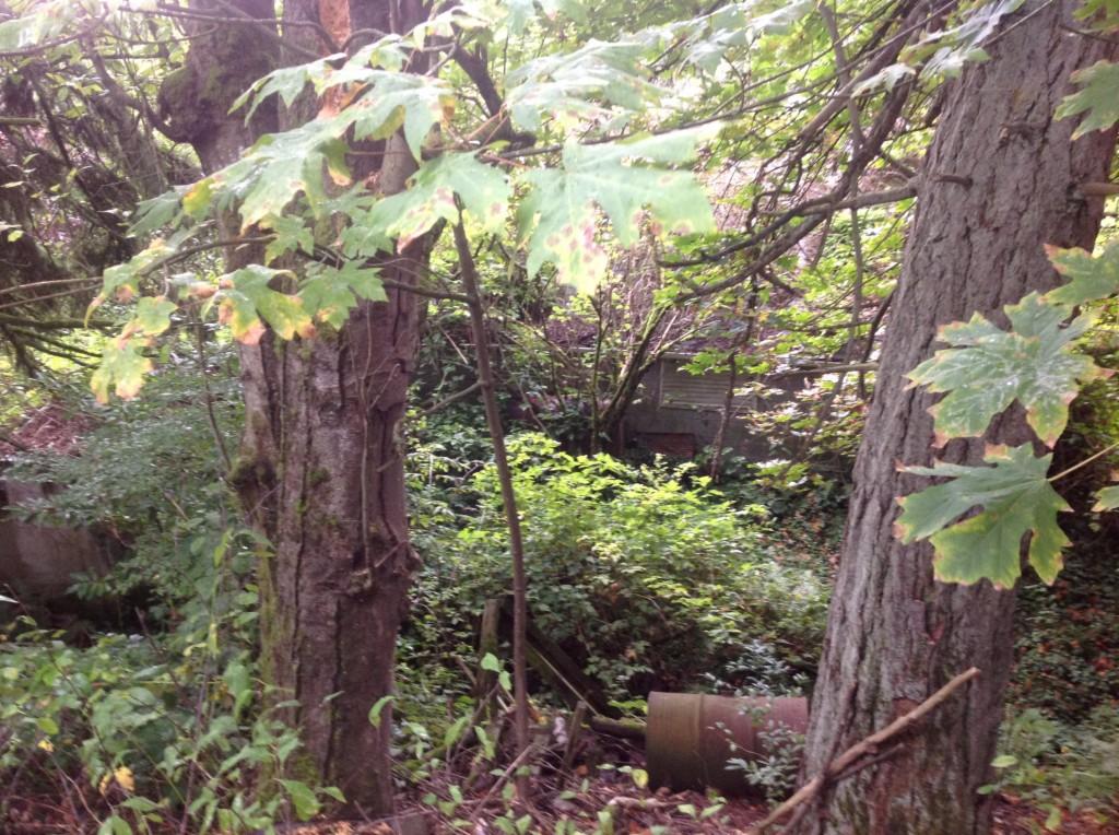 Photo of 303 S Woodland  Puyallup  WA