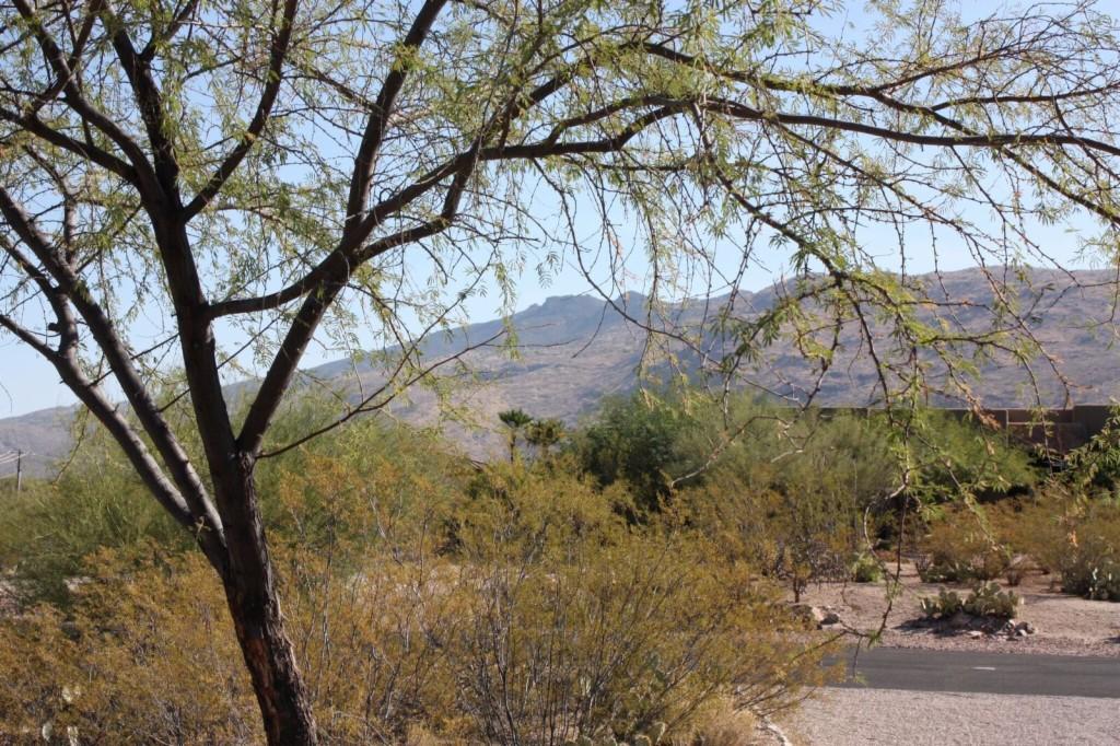 3898 S Saguaro Monument Place Tucson, AZ 85730