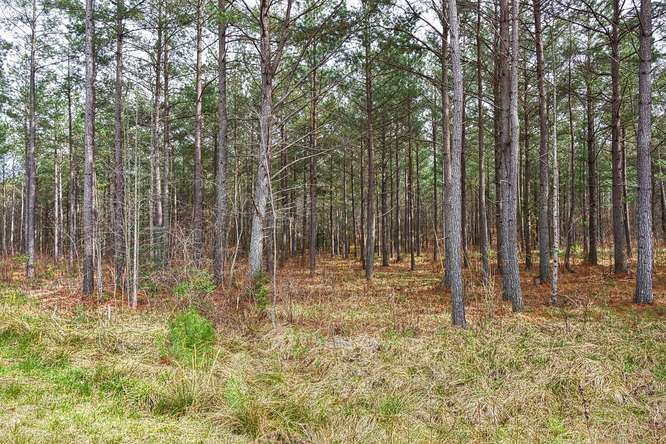Lot 113 Thirteen Hundred, Blairsville in Union County, GA 30512 Home for Sale