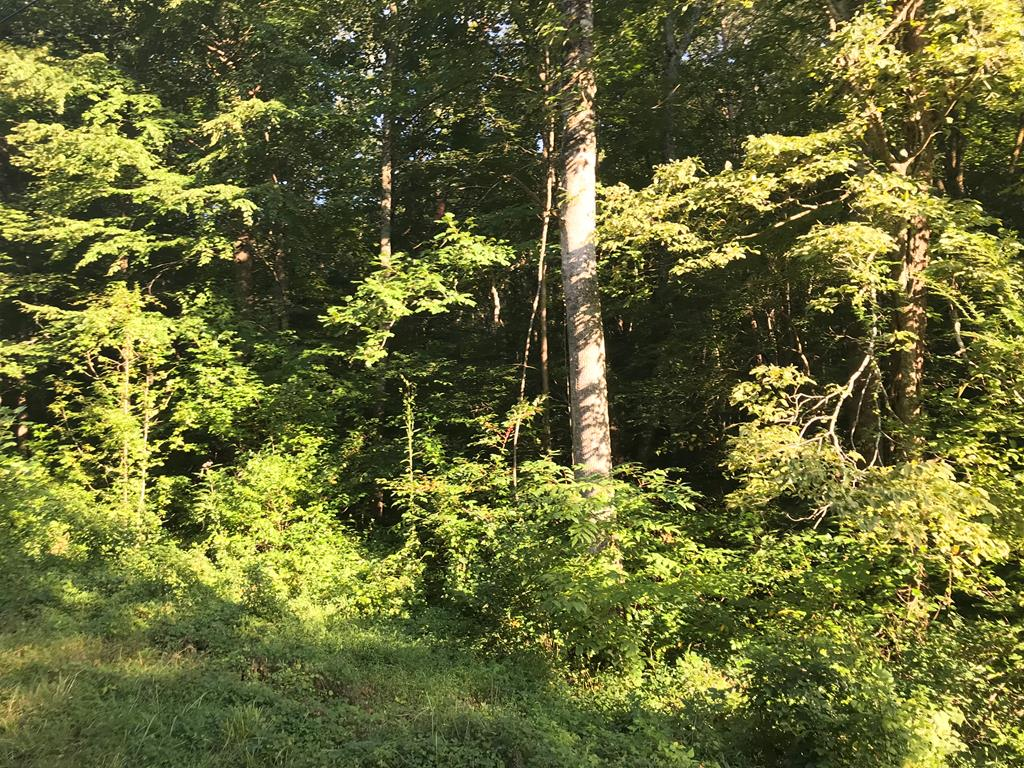 Real Estate for Sale, ListingId: 31132711, Morristown,TN37814