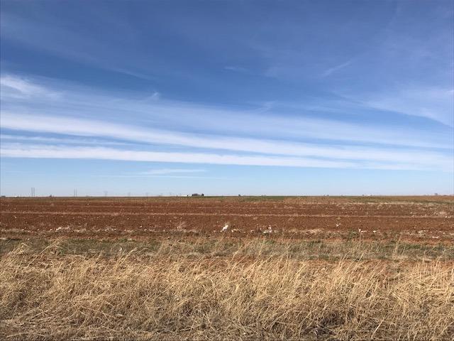 1822 Farm Road 1729, Lubbock, Texas