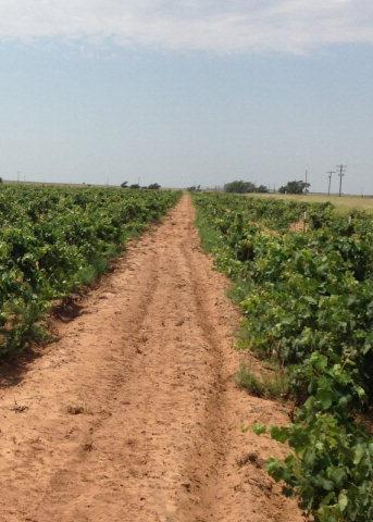 45 acres in Littlefield, Texas