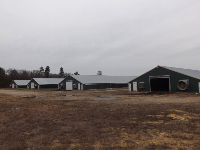217.7 acres Laurel Hill, NC