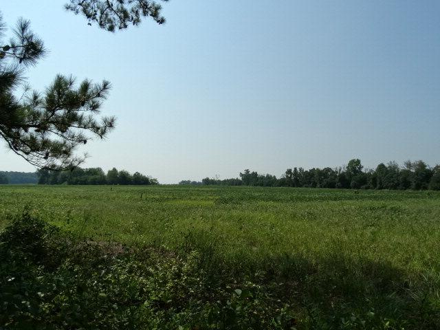 173 acres Laurinburg, NC