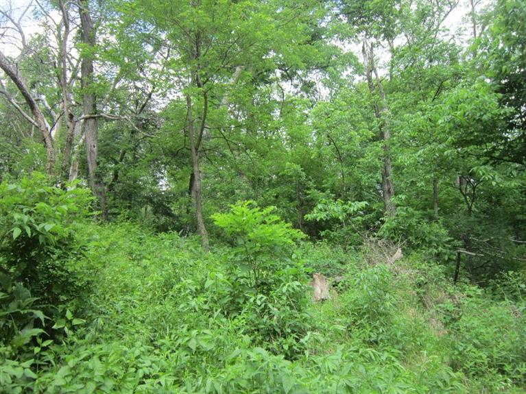 24.31 acres by Maquoketa, Iowa for sale