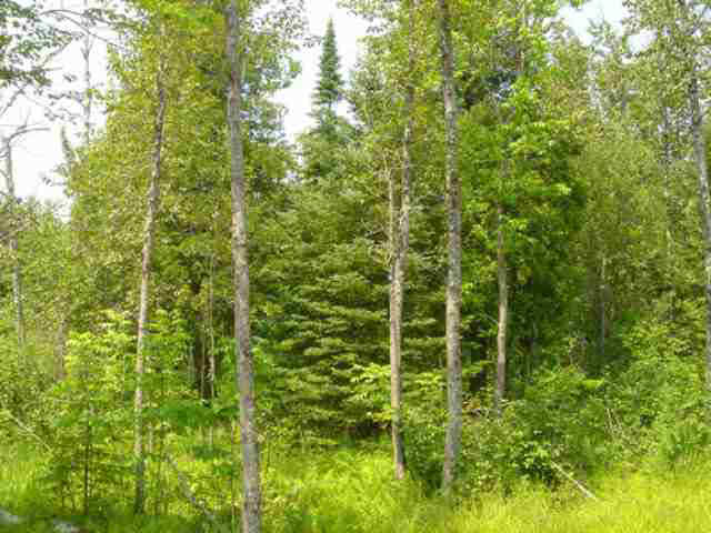 2.78 acres in Lutsen, Minnesota