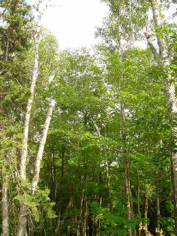 2.15 acres in Lutsen, Minnesota