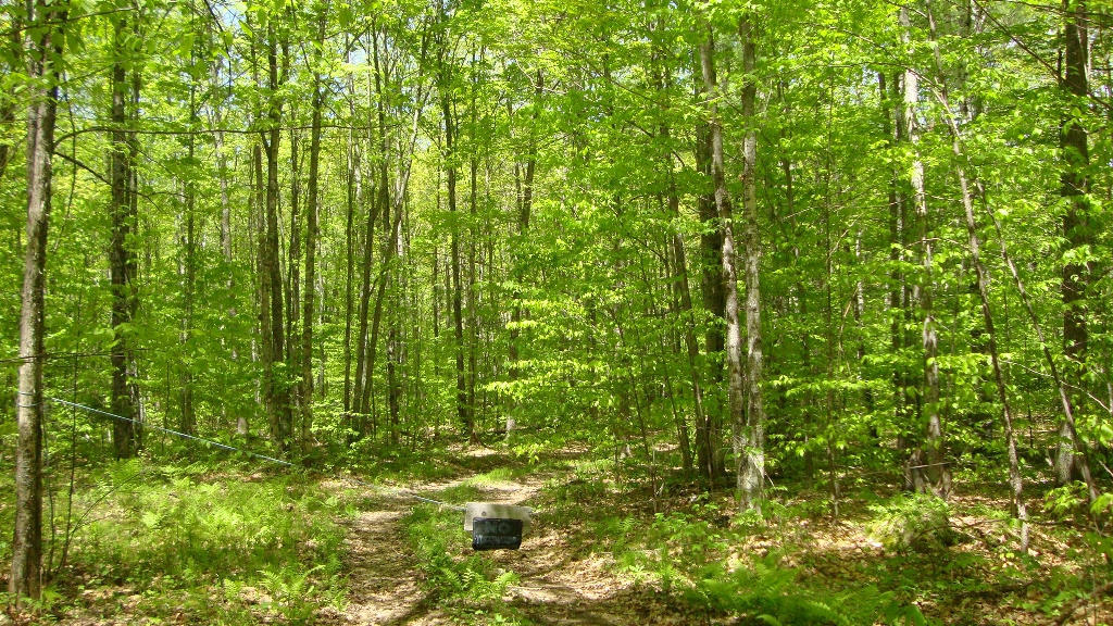 Real Estate for Sale, ListingId: 28535611, Silver Cliff, WI  54104