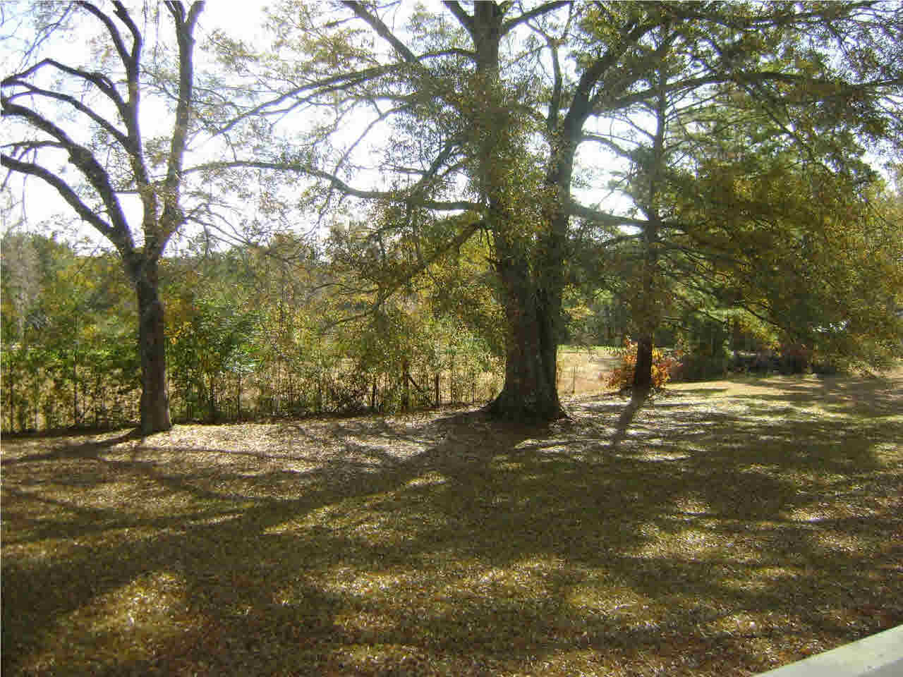 251 Benson Rd, Silver Creek, MS 39663