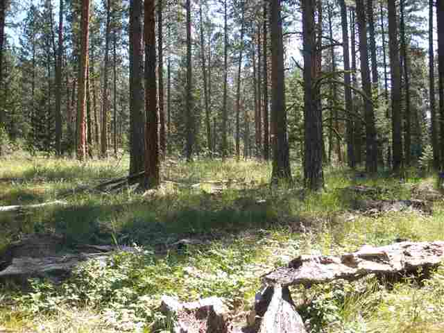 4.15 acres in Frenchtown, Montana