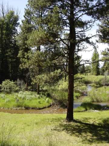 Real Estate for Sale, ListingId: 20372153, Seeley Lake,MT59868