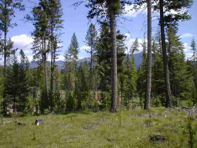 6.12 acres Seeley Lake, MT