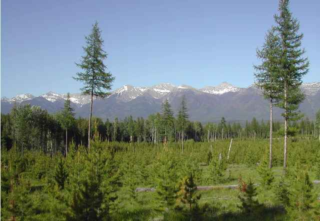 44.25 acres in Swan Valley, Montana