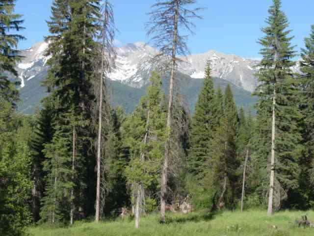 5.3 acres in Condon, Montana
