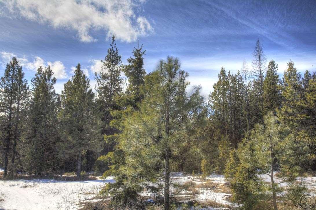 110.68 acres Libby, MT