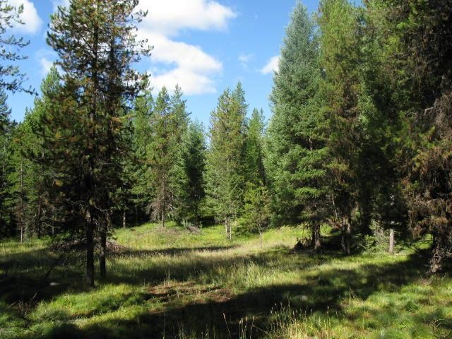 30.8 acres Seeley Lake, MT