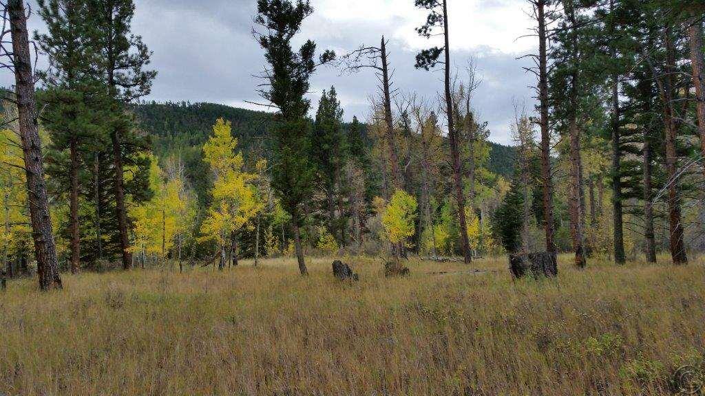150 acres Helmville, MT