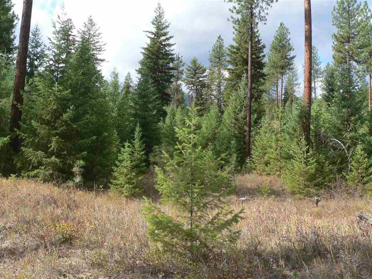 239 acres Superior, MT