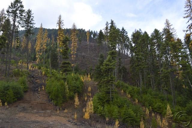 60.17 acres Thompson Falls, MT