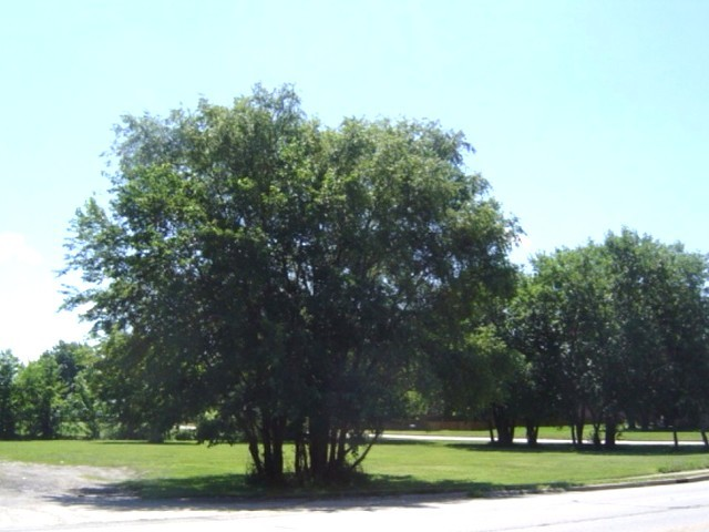 611 South Maplewood Drive RANTOUL, IL 61866