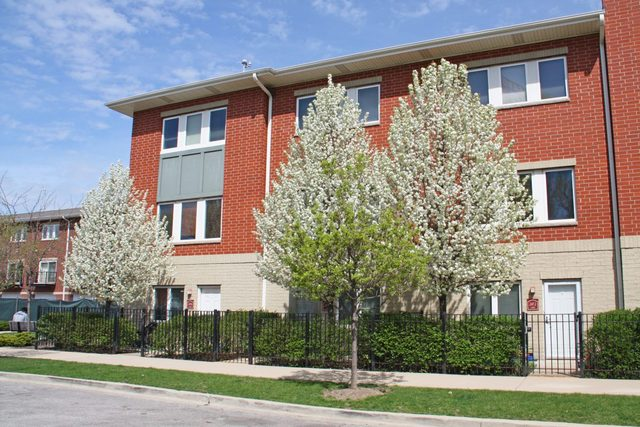 Photo of 2412 West Bross Avenue  CHICAGO  IL