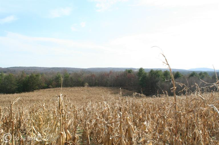 Image of Acreage for Sale near Clearville, Pennsylvania, in Bedford county: 58.00 acres