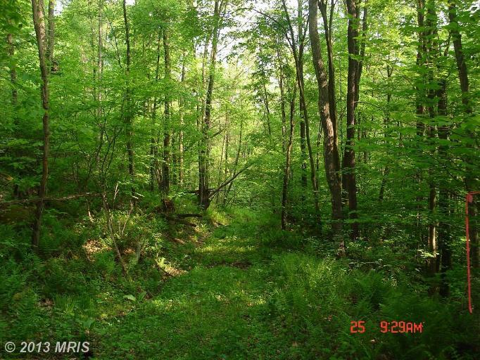 5 acres in Grantsville, Maryland