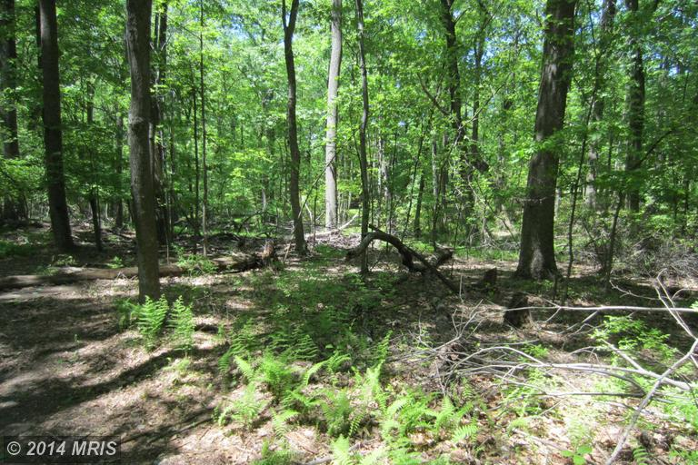 3.13 acres in Burtonsville, Maryland