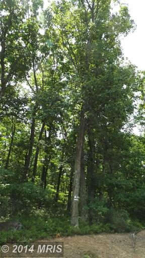79.3 acres by New Creek, West Virginia for sale