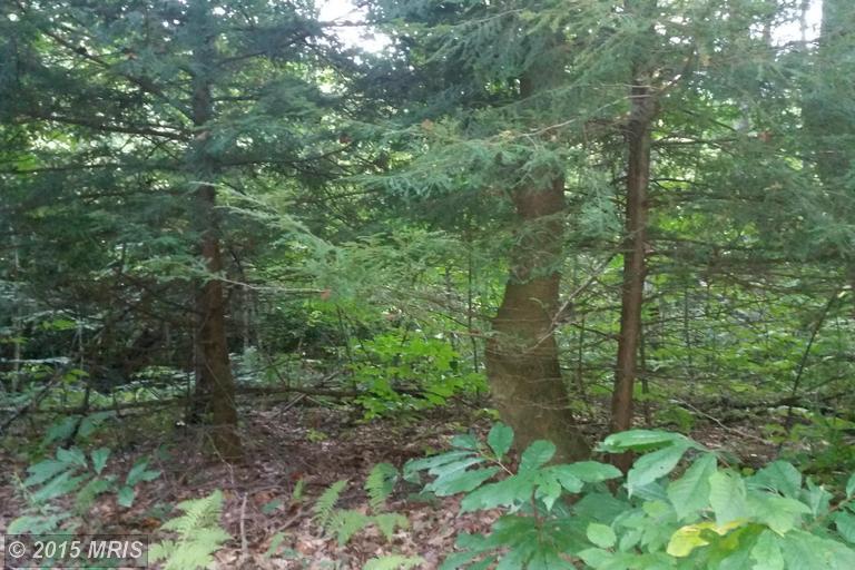 Boy Scout Camp Rd, Buckhannon, WV 26201