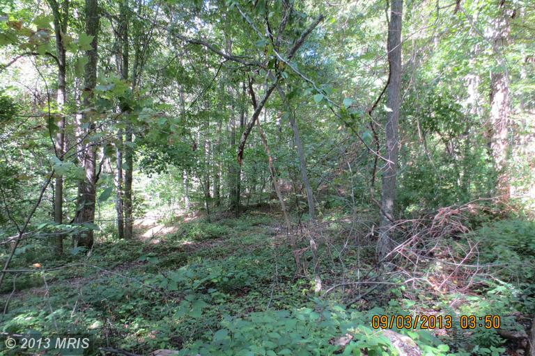 27 acres in Elkins, West Virginia
