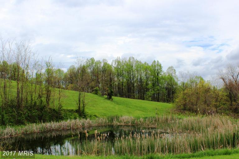 Farm House, Detached - CHESTER GAP, VA (photo 3)