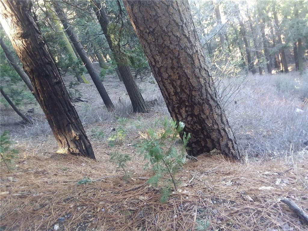 0 El valle Road Cedarpines Park, CA 92322