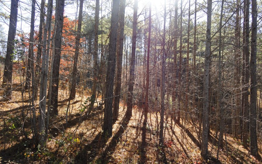 LT 19 LOFTIS MOUNTAIN ROAD, Blairsville in Union County County, GA 30512 Home for Sale