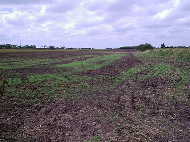 34.92 acres by Clyde, Texas for sale