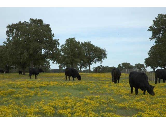 197 acres by Flower Mound, Texas for sale