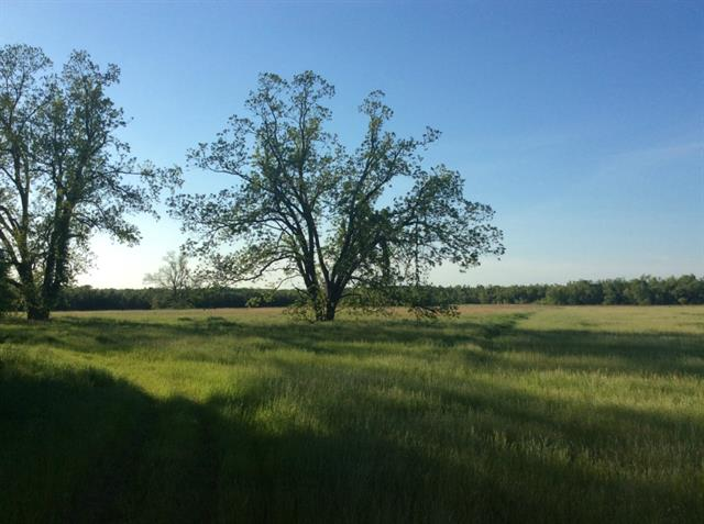 640 acres by Honey Grove, Texas for sale