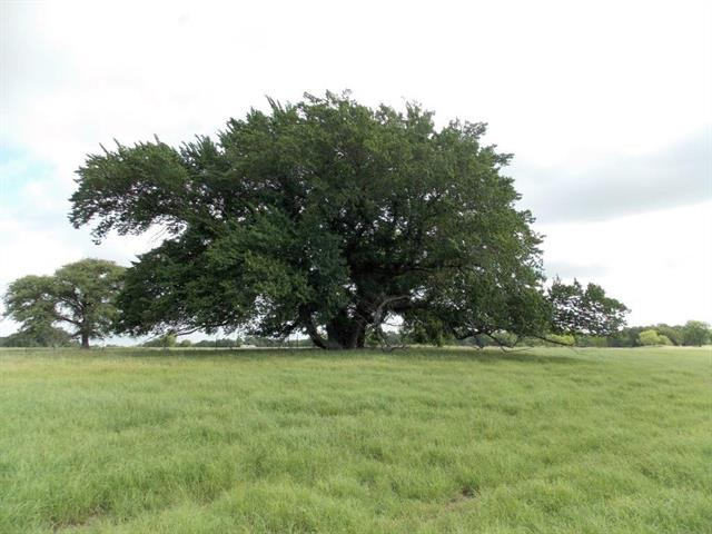 Image of  for Sale near Granbury, Texas, in Hood County: 60.5 acres