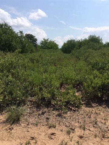 Tbd PR 348 Hawley, TX 79525