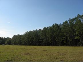 Real Estate for Sale, ListingId: 25515220, Ocklawaha,FL32179