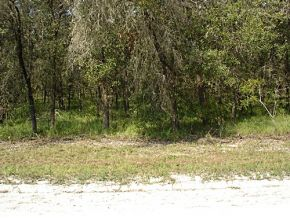 Real Estate for Sale, ListingId: 25513537, Williston,FL32696